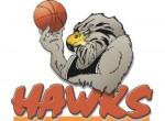 hawkes-bay-hawks-logo